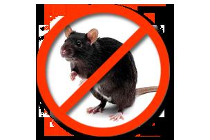 Дератизация Черные крысы Запорожье