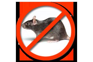 Дератизация Серые крысы Запорожье