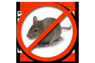 Дератизация Мышей Запорожье