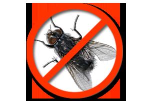 Дезинсекция мух Запорожье