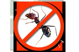 Дезинсекция муравьев Запорожье