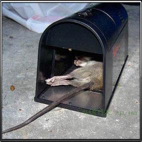 электрическая ловушка для крыс