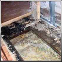Грибок под деревянным полом