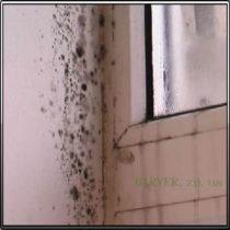 Грибок на откосах пластикового окна