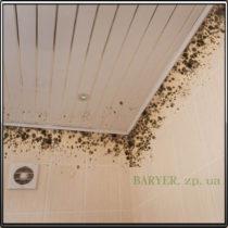 Грибок в ванной на потолке