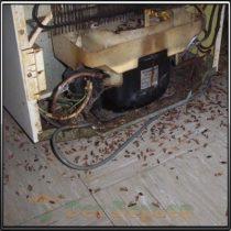 Тараканы вывели из строя холодильник