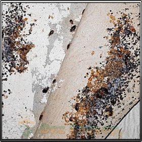 фекалии тараканов