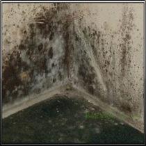 Плесень в углах стен